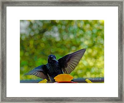 Aha I Have Found You At Last Framed Print by Al Bourassa