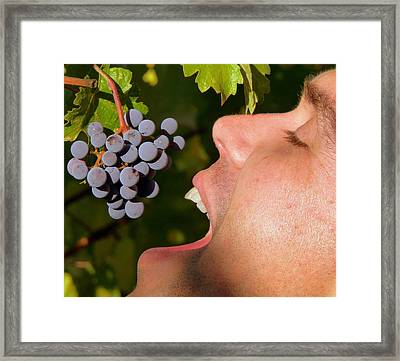 Ahh Wine Grapes Framed Print by Jeff Lowe