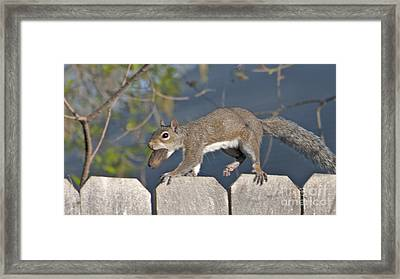 Ahhh Nuts Framed Print