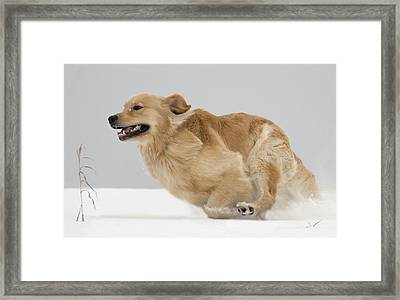 Ahhhh Freedom Framed Print