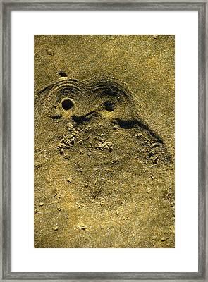 Ahipara Owl Framed Print by Helen Worley