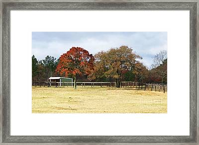 Aiken Framed Print by Andrea Anderegg