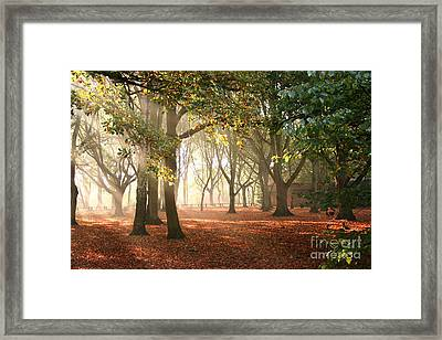 Framed Print featuring the photograph Air Autumn by Boon Mee