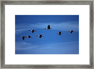 Air Canada Framed Print by Skip Willits