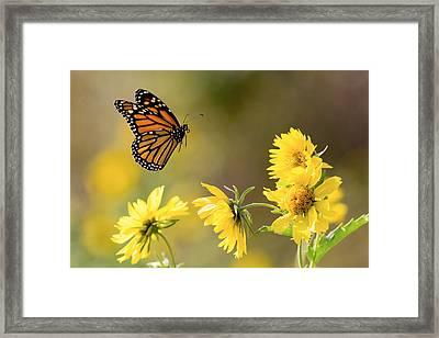 Air Monarch Framed Print