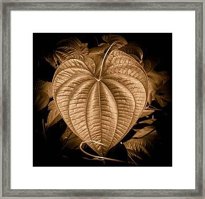 Air Potato Heart In Sepia Framed Print