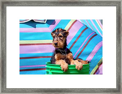 Airedale Puppies In A Green Bucket (mr Framed Print by Zandria Muench Beraldo
