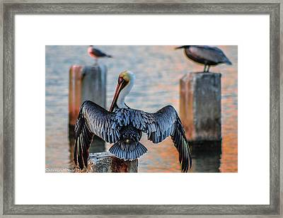 Airing Out Framed Print