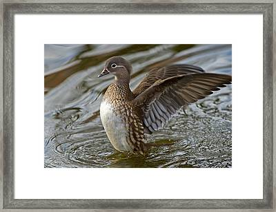 Airing Framed Print by Torbjorn Swenelius