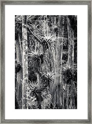 Airplants Framed Print
