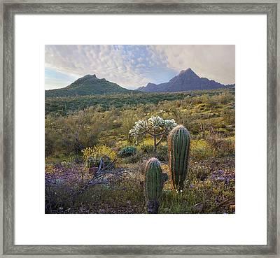 Ajo Mountain In Arizona Framed Print by Tim Fitzharris