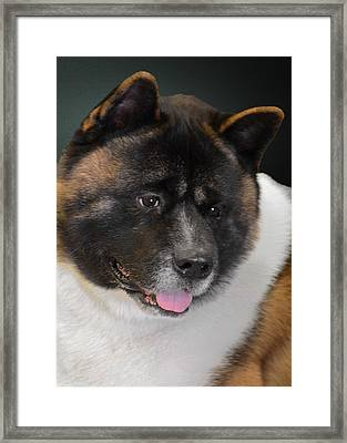 Akita - A Dog's Tale Framed Print by Christine Till