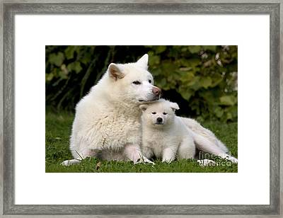 Akita Inu Dog And Puppy Framed Print by Jean-Michel Labat