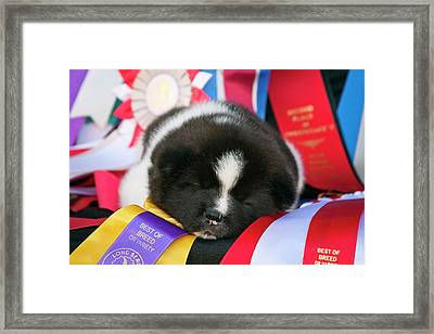 Akita Puppy Dreams (mr & Pr Framed Print by Zandria Muench Beraldo