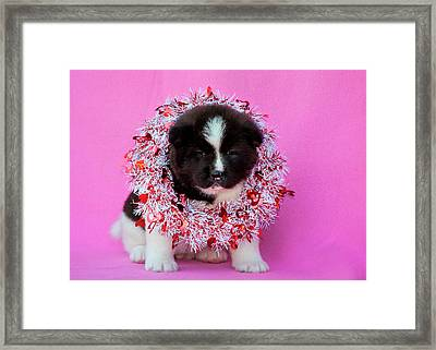 Akita Puppy On Valentine's Day (mr & Pr Framed Print by Zandria Muench Beraldo