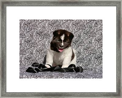 Akita Puppy Sitting In Black And White Framed Print by Zandria Muench Beraldo