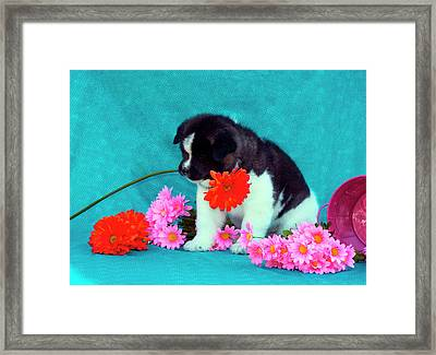 Akita Puppy With Flowers (mr & Pr Framed Print by Zandria Muench Beraldo