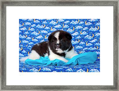 Akita Puppy With Moons And Stars (mr & Framed Print by Zandria Muench Beraldo