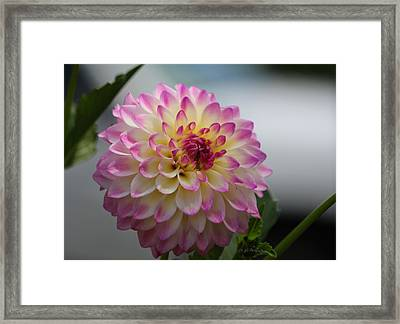 Framed Print featuring the photograph Ala Mode by Jeanette C Landstrom