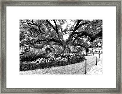 Alamo Grounds Framed Print