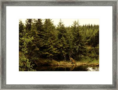 Alaska Beauty Framed Print by Davina Washington