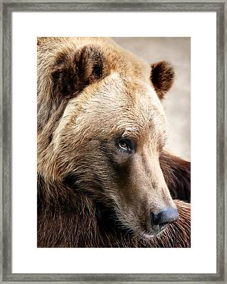 Alaskan Brown Bear Framed Print by Jim Hughes