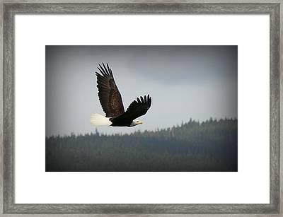 Alaskan Flight Framed Print