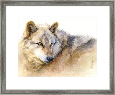 Alaskan Gray Wolf Framed Print