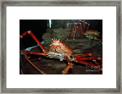 Alaskan King Crab 5d24125 Framed Print by Wingsdomain Art and Photography