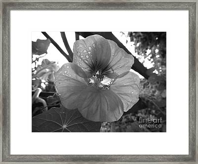 Framed Print featuring the photograph Alaskan Rose One by Laura  Wong-Rose