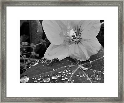 Framed Print featuring the photograph Alaskan Rose Three by Laura  Wong-Rose