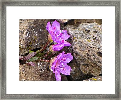 Framed Print featuring the photograph Alaskan Wildflower by Julie Andel