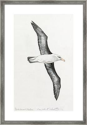 Albatross Framed Print by Michael Earney
