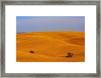 Trees In The Wheat Field Framed Print