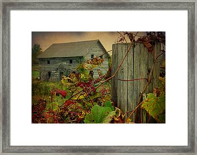 Albert Road Framed Print by Terry Eve Tanner