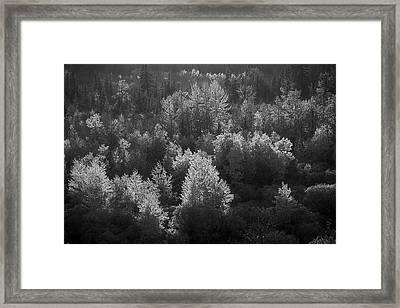 Alberta Autumn Framed Print
