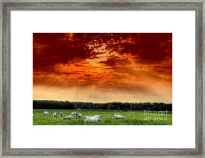 Alberta Canada Cattle Herd Hdr Sky Clouds Forest Framed Print by Paul Fearn