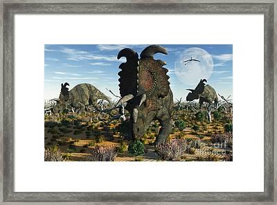 Albertaceratops Dinosaurs Grazing Framed Print by Mark Stevenson
