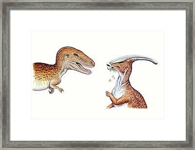 Albertosaurus And Parasaurolophus Framed Print by Deagostini/uig