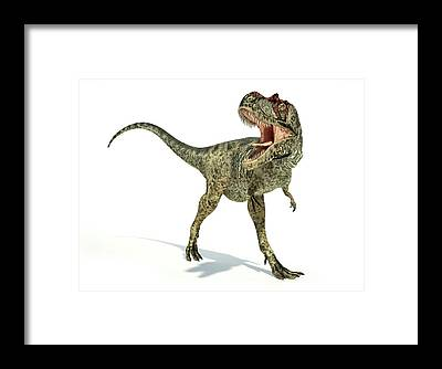 Albertosaurus Framed Prints