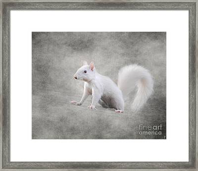 Albino Squirrel Framed Print by Jai Johnson