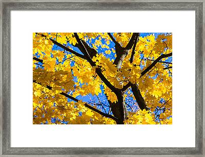 Alchemy Of Nature - Refining The Sungold Framed Print by Alexander Senin
