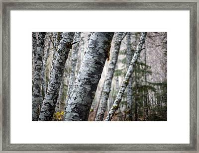 Alder Forest Leaning Framed Print