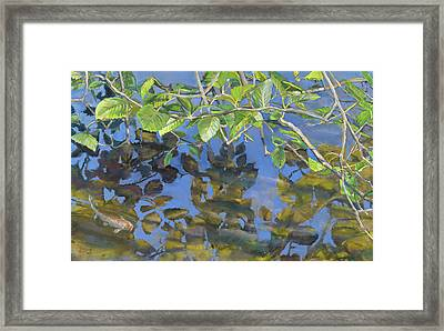 Alder Leaves And Koi Framed Print