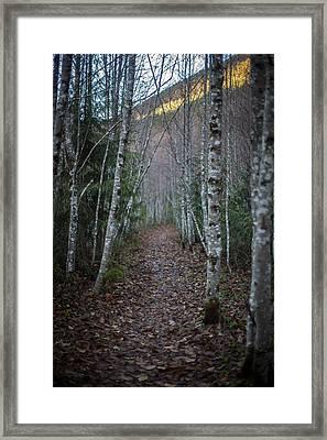 Alder Path Framed Print
