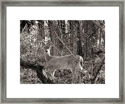 Alert Framed Print