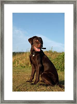 Alert Framed Print by Paul Lilley