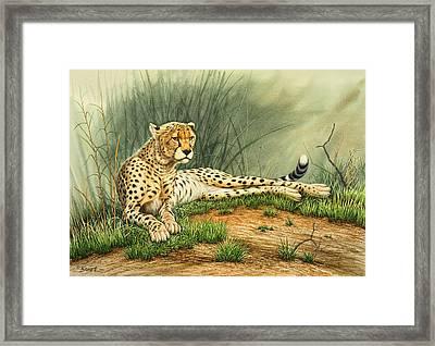 Alert Repose  - Cheetah Framed Print by Paul Krapf