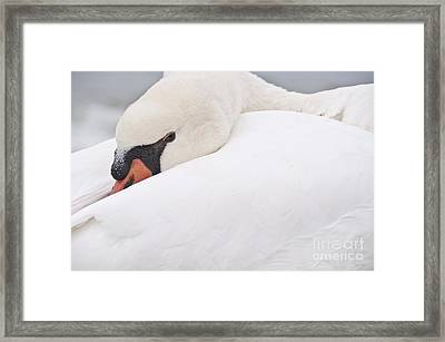 Alert Rest Framed Print