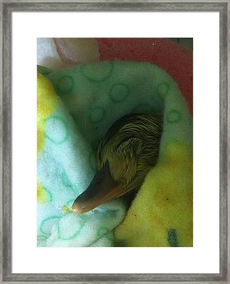 Alex Framed Print by Sheri Allan